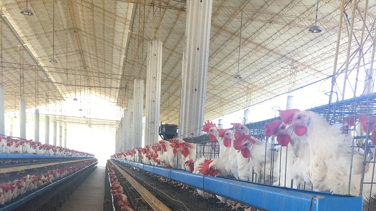 Gongli-Upvc Corrugated Sheet - Upvc Roof, Pvc Corrugated Sheet Price-9